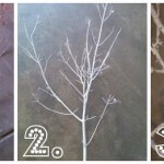 #DIY frosted tree branches and letters to santa by Bridgywidgey on iheartnaptime.net