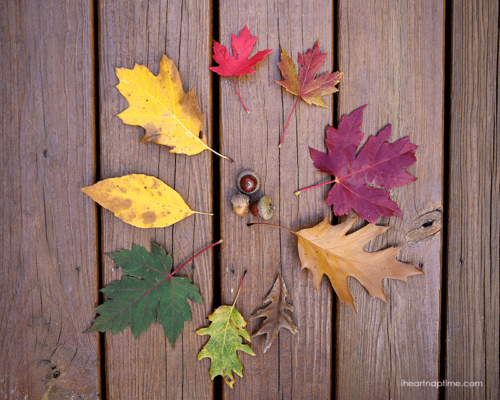 Fall leaves by Jamielyn Nye, I Heart Nap Time