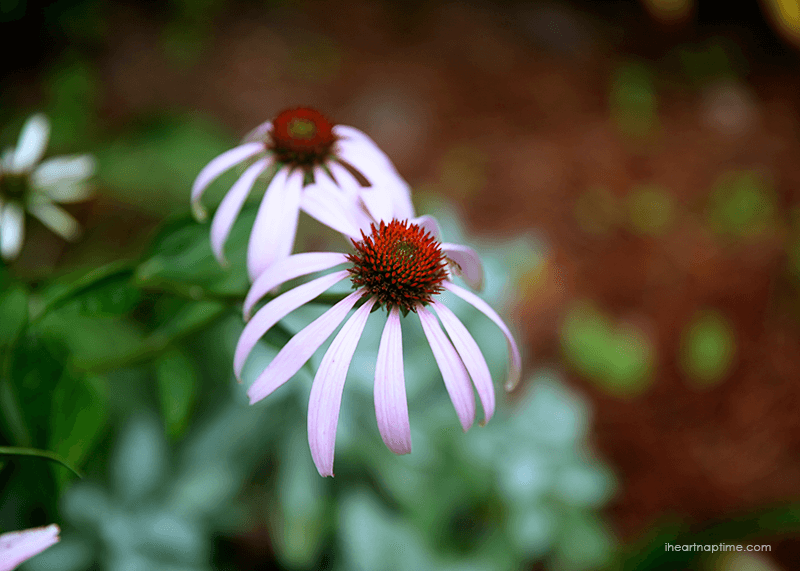 Flower image by Jamielyn, I Heart Nap Time