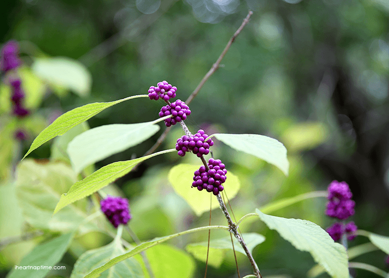 Plants by Jamielyn Nye, I Heart Nap Time