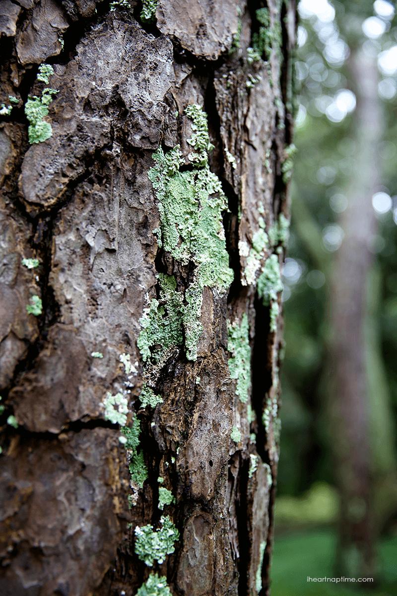 Tree bark, by Jamielyn, I Heart Nap Time