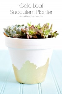 Gold-Leaf-Succulent-Planter