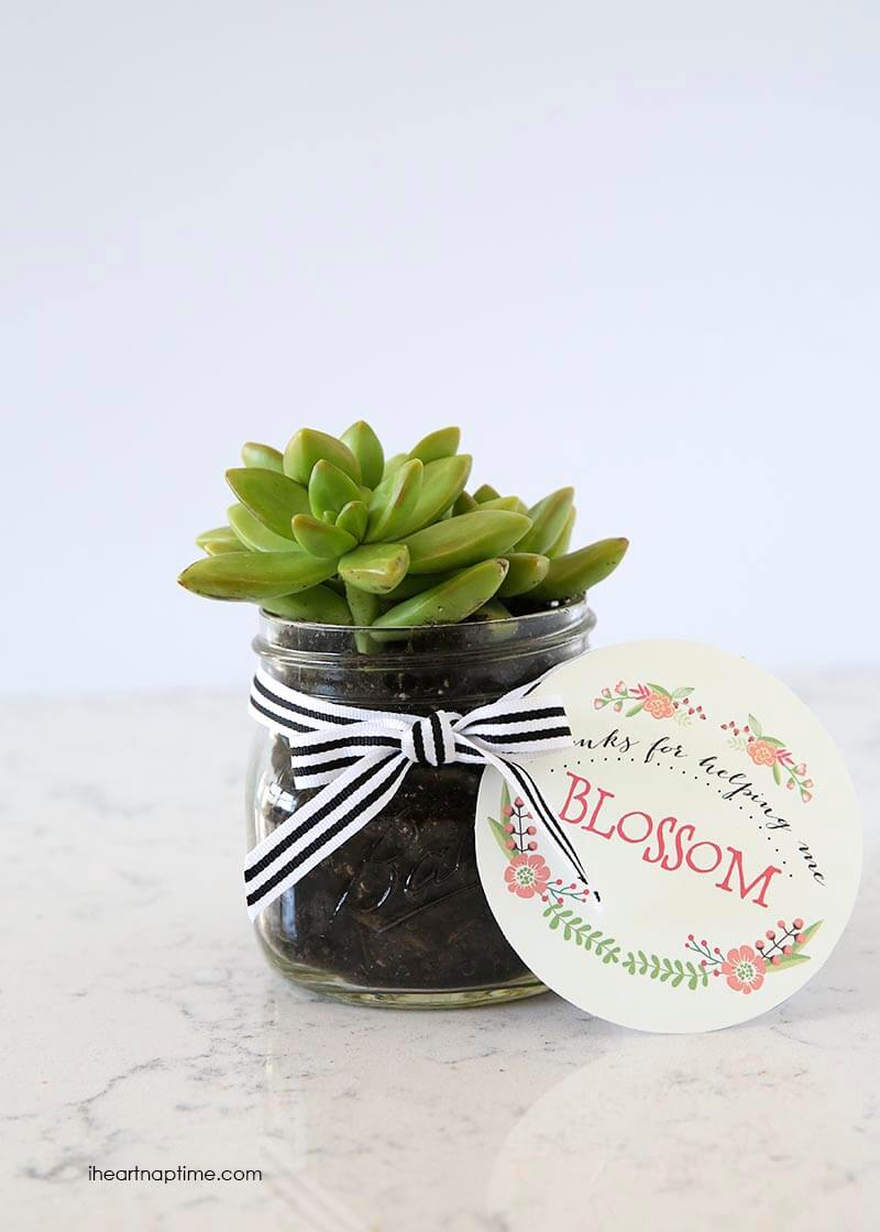 DIY succulent gift idea - I Heart Nap Time