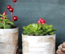 Birchwood-Succulent-Planter-Holder-Lolly-Jane