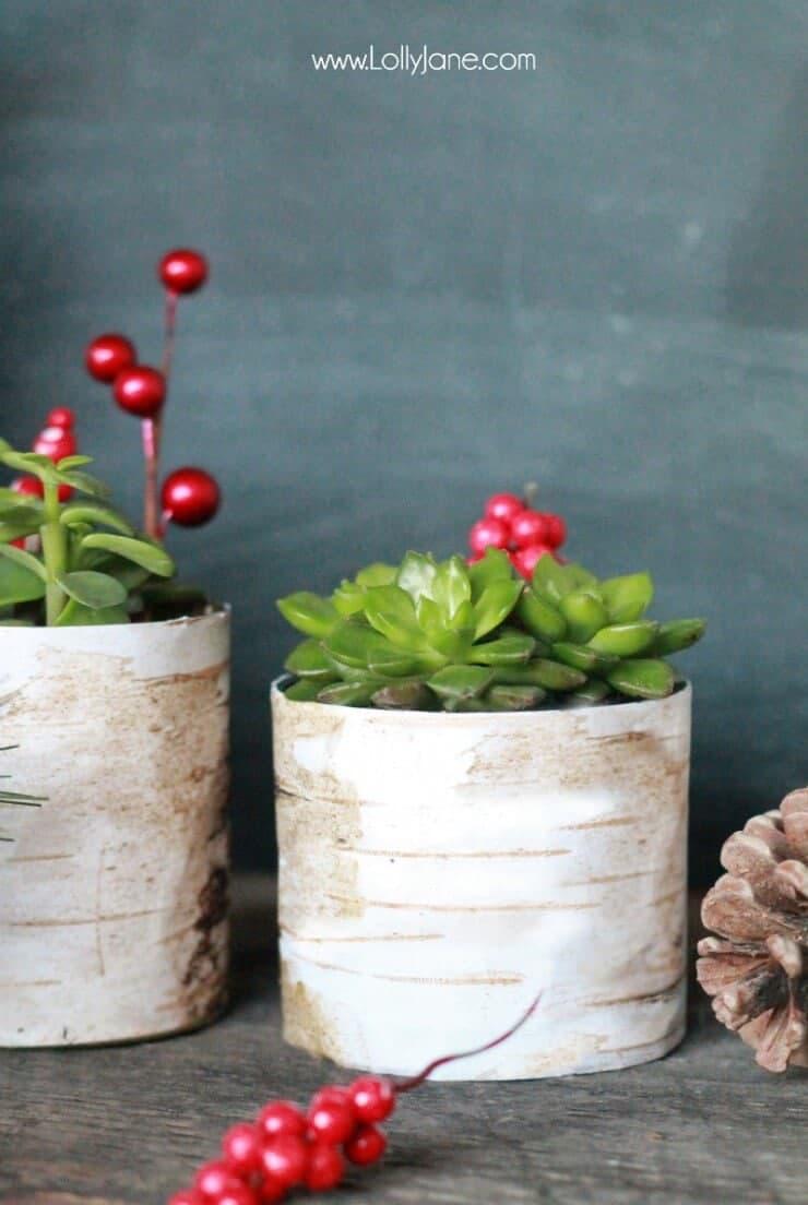 Birchwood-Succulent-Planter-Holder-Lolly-Jane