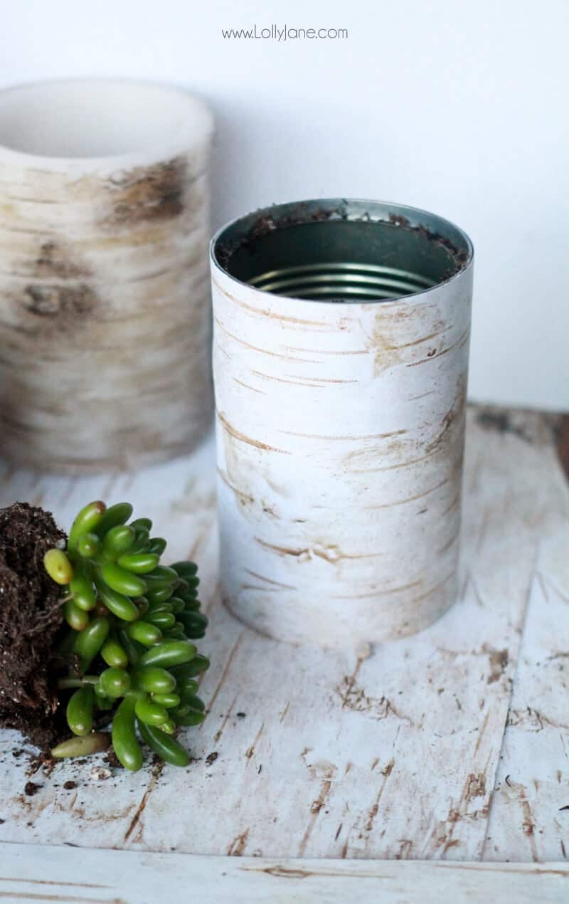 Faux Birch Wood Succulent Planter by Lolly Jane on iheartnaptime.com