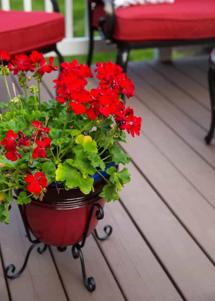 geranium and planter on on iheartnaptime.net