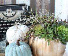 diy-succulent-pumpkin-planter-for-fall