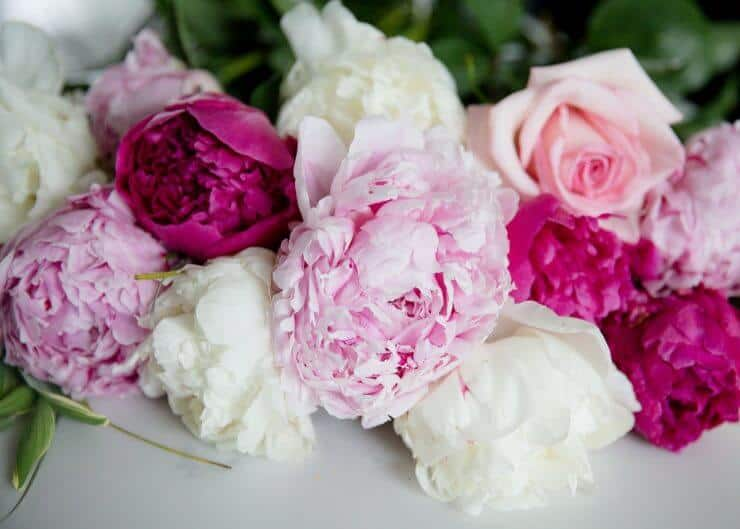 Pink peonies and roses