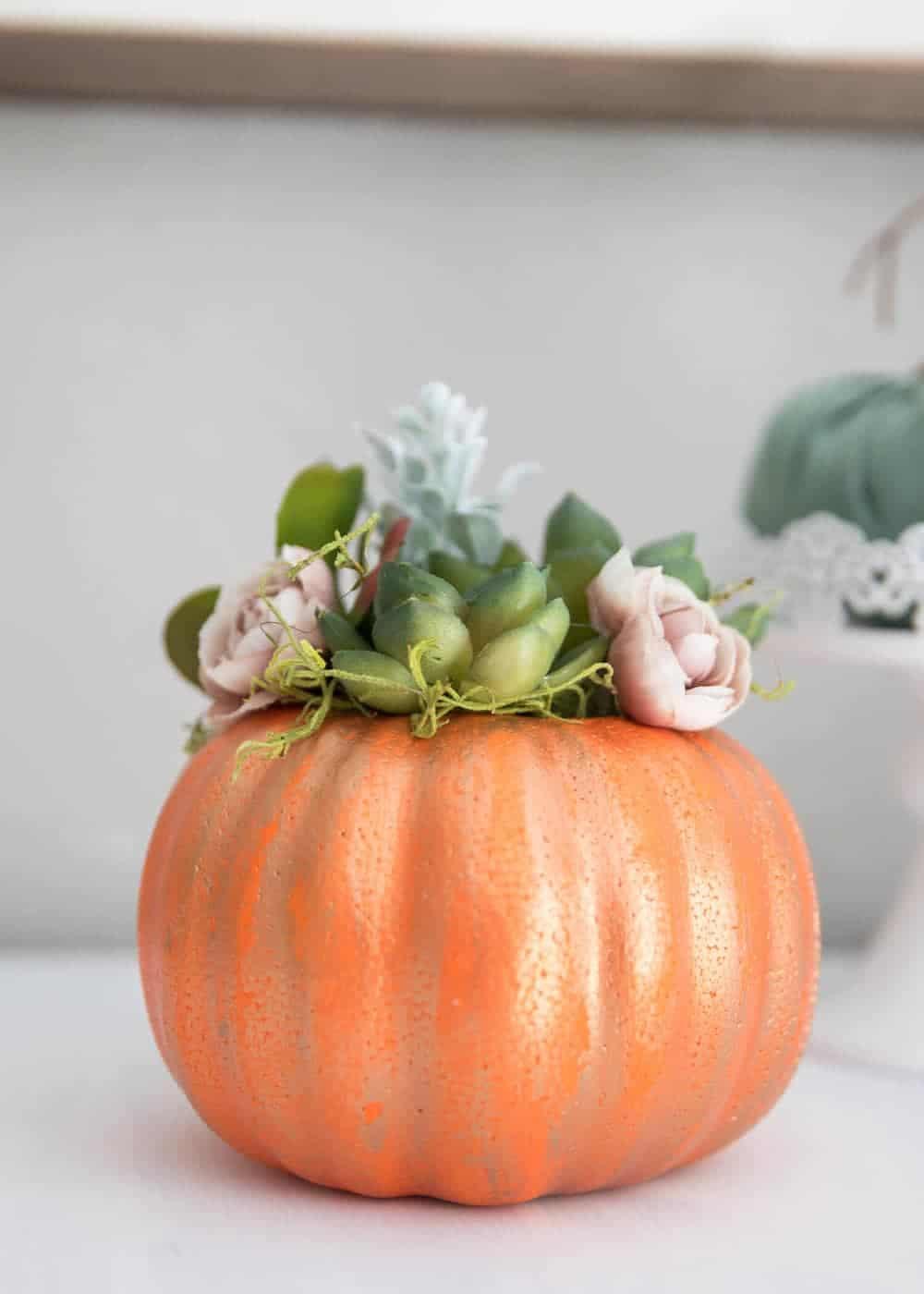pumpkin succulent halloween craft