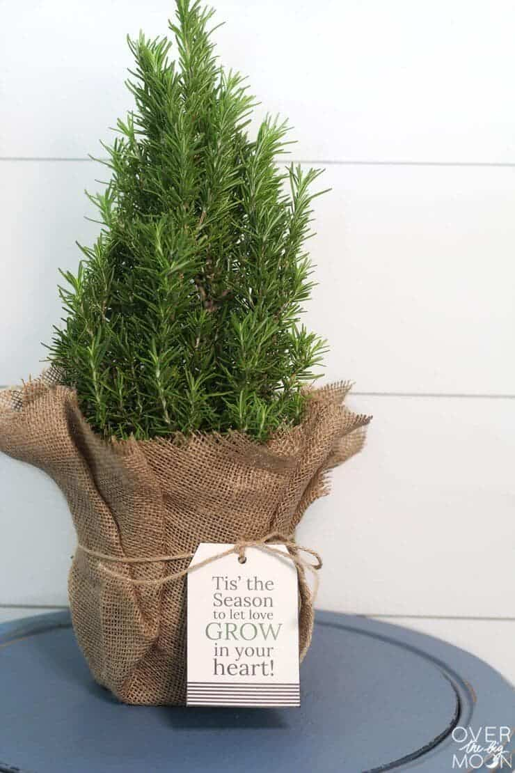 Looking for a holiday gift for your neighbors, colleagues or friends? These Mini Christmas Trees are the perfect gift!